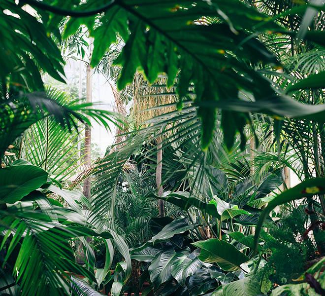 Jornada Iberflora. Estrategias Internacionales De Integración Del Verde En La Ciudad: Beneficios Que Aportan Las Zonas Verdes Al Ciudadano