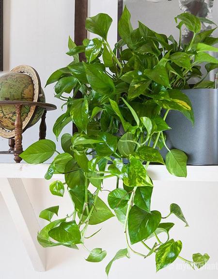 potus-planta-decoracion.jpg