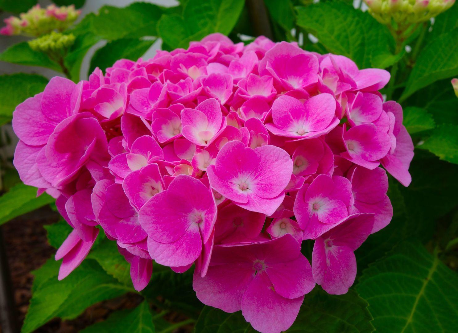 Descubre Las Cuatro Flores Más Bonitas De La Temporada De Julio Aepjp