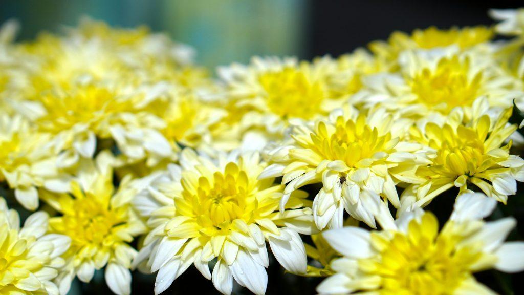 descubre las flores de octubre