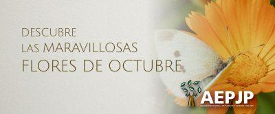 Descubre Las Maravillosas Flores De Octubre