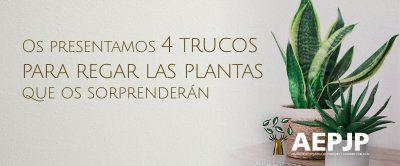 4 Trucos Para Regar Las Plantas