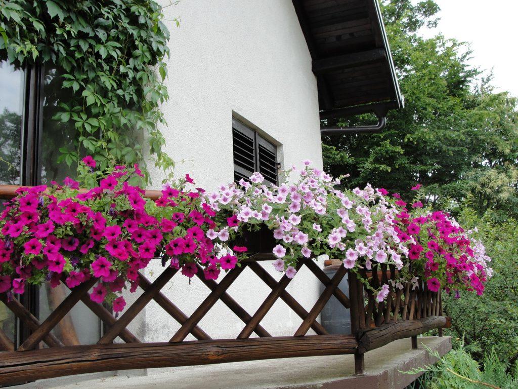 ¿Cómo combinar las plantar en un jardín?