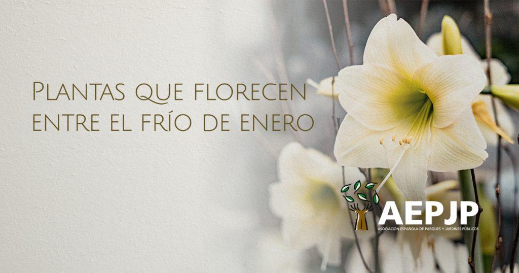 portada-plantas-florecen-enero