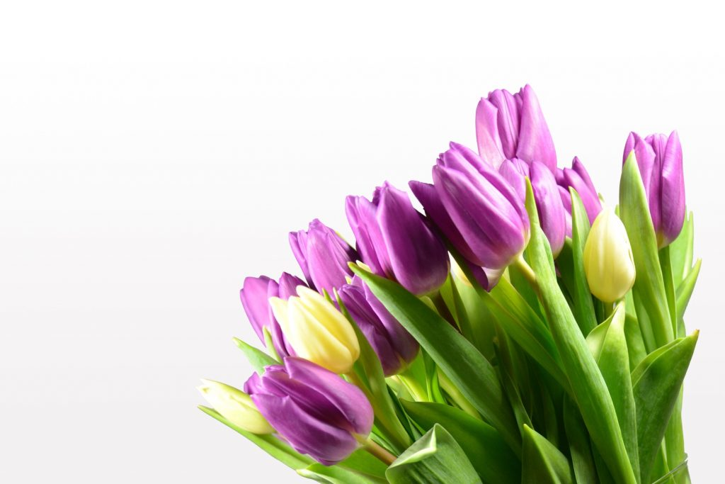 qué plantas de flores se plantan en otoño tulipán