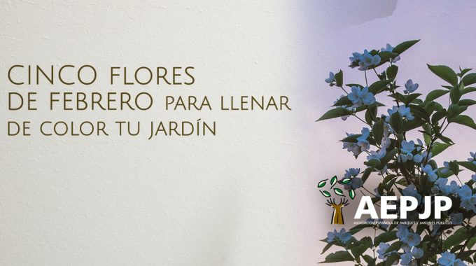 Portada-flores-de-febrero
