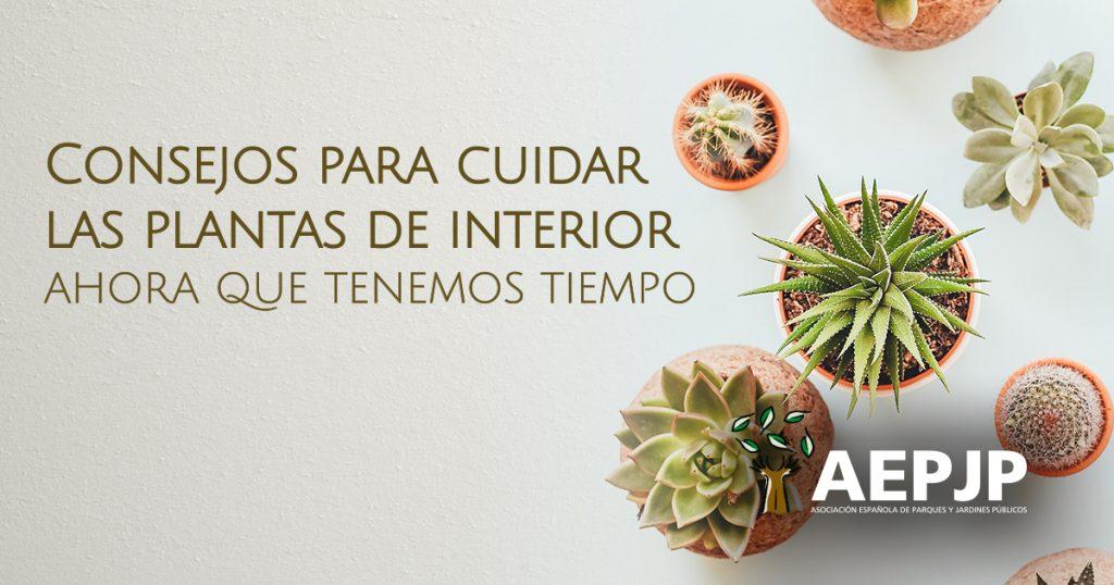 portada articulo consejos para cuidar plantas de interior