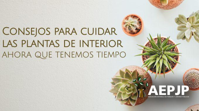 Portada Articulo Plantas De Interior Cuidados