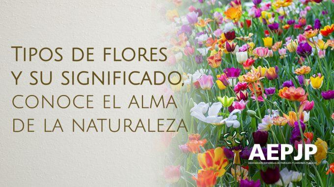 Imagen Tipos De Flores Y Su Significado