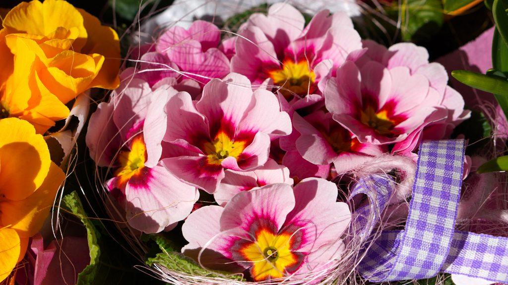 flores de marzo caléndula