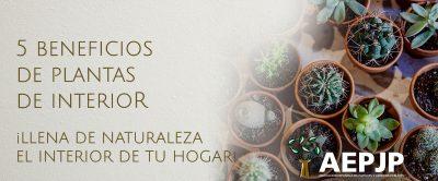 Portada Beneficios Plantas De Interior
