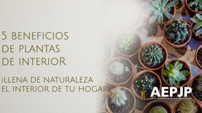 Portada Beneficios Plantas De Interior