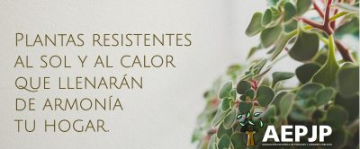 Plantas Resistentes Al Sol Y Al Calor Portada