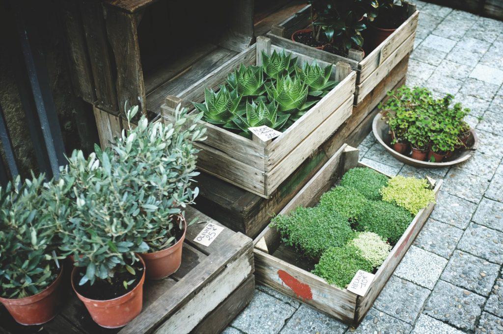 diseño de jardines interiores para casas