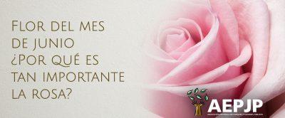Poratada Flor Del Mes De Junio