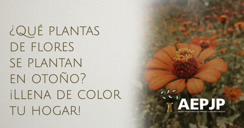 portada qué plantas de flores se plantan en otoño