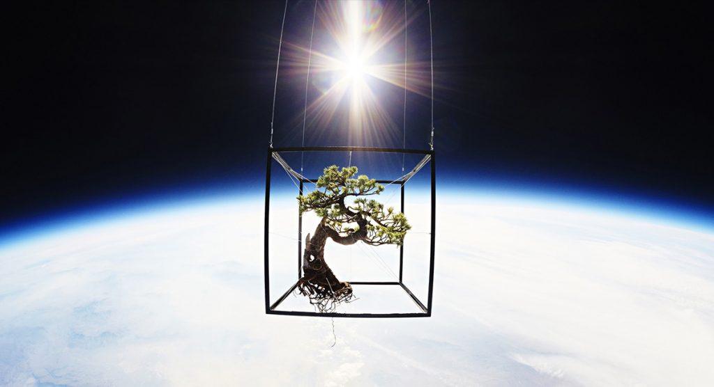bonsai azuma makoto