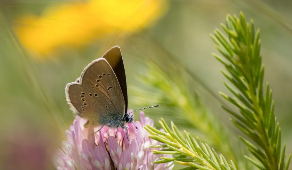 biodiversidad onu
