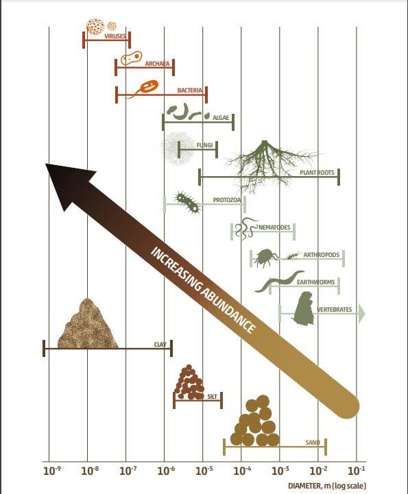 Infografía biodiversidad suelos