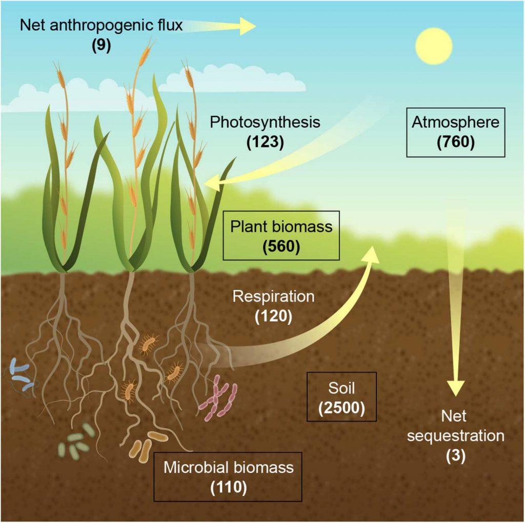 Figura 1 artículo más cultivos de carbono